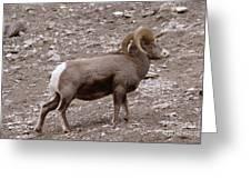 A Ram Climbing  Greeting Card