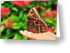 A Random Walk In The Butterfly Garden Greeting Card by Photography  By Sai