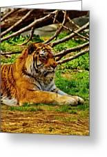 A Real Detroit Tiger Greeting Card