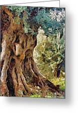 A Really Old Olive Tree Greeting Card