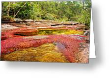 A Red And Yellow River In Colombia Greeting Card