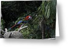 A Red Green And Blue Macaw On A Branch In The Jurong Bird Park Greeting Card