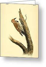 A Red Moustached Woodpecker Greeting Card by Philip Ralley