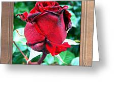 A Red Rose Greeting Card