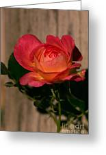 A Red Rosr Against A Weathered  Wood Background Greeting Card