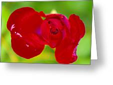 A Red Wet Rose Greeting Card