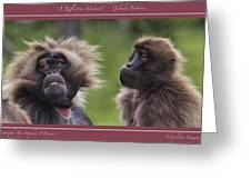 A Reflective Moment    Gelada Baboons Greeting Card