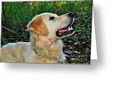 A Retriever's Loving Glance Greeting Card