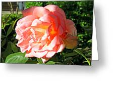 A Rose And A Rose Greeting Card