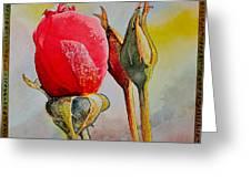 A Rose Awaitingtwo More Roses Greeting Card