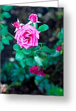 A Rose Blooms Greeting Card