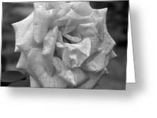 A Rose In Black And White Greeting Card