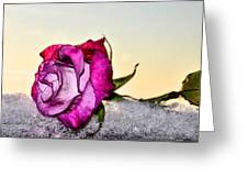 A Rose In Winter Greeting Card