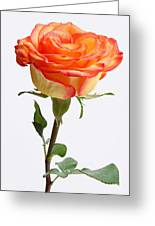 A Rose Is A Rose Is A Rose Greeting Card by Juergen Roth