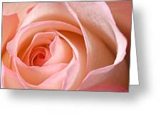 A Rose Is A Rose Greeting Card
