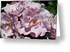 A Rose Named Blueberry Hill  Greeting Card