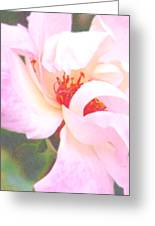 A Rose Unfurls Greeting Card