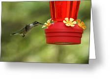 A Ruby-throated Hummingbird Greeting Card