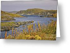 A Safe Harbor In Newfoundland Greeting Card