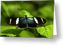 A Sara Longwing Butterfly Heliconius Greeting Card