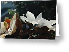 A Sea Of Magnolias Greeting Card