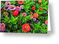 A Sea Of Zinnias 05 Greeting Card