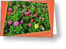 A Sea Of Zinnias 06 Greeting Card