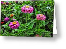 A Sea Of Zinnias 09 Greeting Card