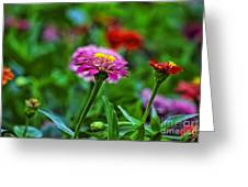 A Sea Of Zinnias 13 Greeting Card