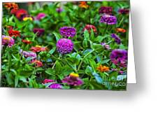 A Sea Of Zinnias 14 Greeting Card