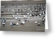 A Seagulls Life Greeting Card by Sheldon Blackwell