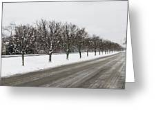 A Sequence Of Trees Greeting Card
