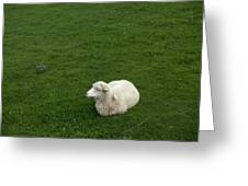 A Sheep Stands In A Green Prairie Greeting Card