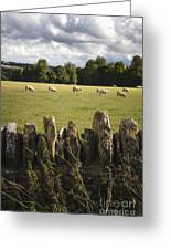 A Sheep's Field Greeting Card