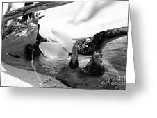 A Shell On Driftwood In Black And White Greeting Card