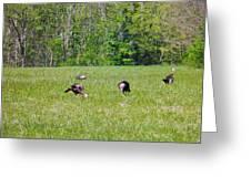 A Shot Of Wild Turkey Greeting Card