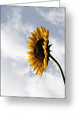 A Side Of Sunflower Greeting Card