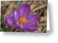 A Sign Of Spring Greeting Card