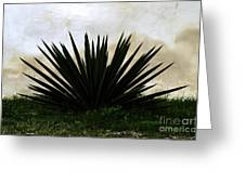 A Simple Yucca Greeting Card