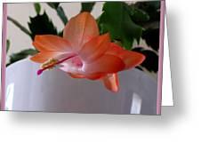 A Single Blossom Greeting Card