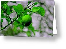 A Single Lime Greeting Card