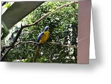 A Single Macaw Bird On A Branch Inside The Jurong Bird Park Greeting Card