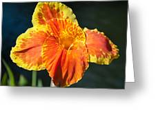 A Single Orange Lily Greeting Card