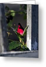 A Single Rosebud Greeting Card