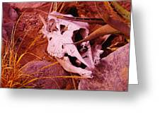 A Skull In The Rocks Greeting Card
