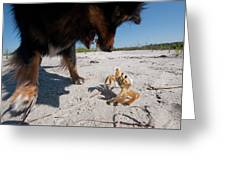 A Small Dog Fights With A Crab Greeting Card