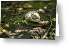 A Snail's Pace Greeting Card