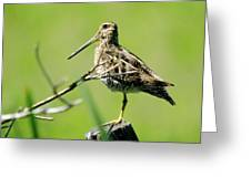 A Snipe  Greeting Card