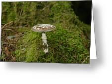 A Sole Mushroom Greeting Card