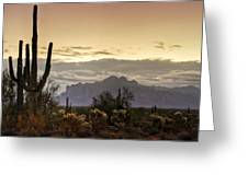 A Sonoran Morning  Greeting Card